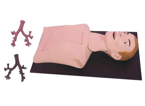 支气管内窥镜训练模型