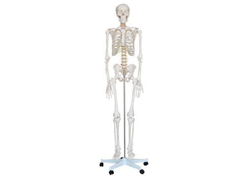 人体骨架模型