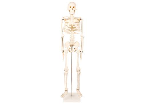 人体骨架模型85CM