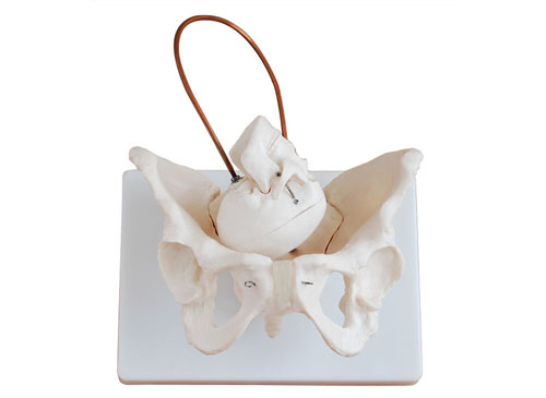 骨盆分娩模型