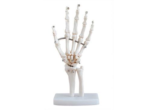 手关节模型