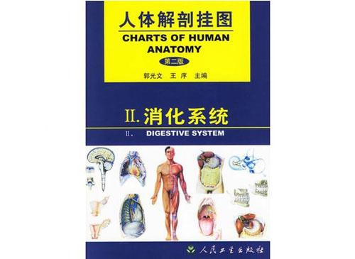 消化系统挂图(25张)