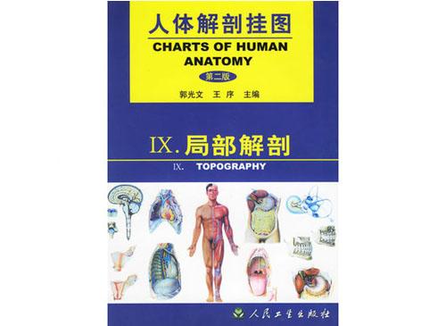局部解剖挂图