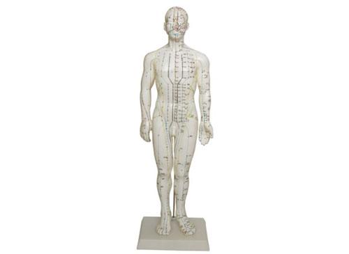 人体穴位模型