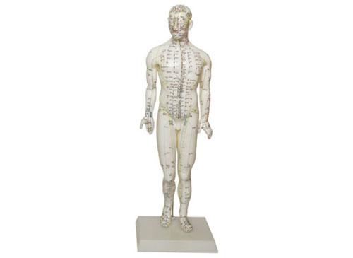 人体经络穴位模型(46CM男性)