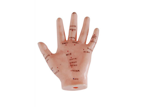手针灸模型