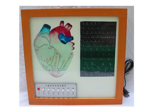 心脏传导系电动模型