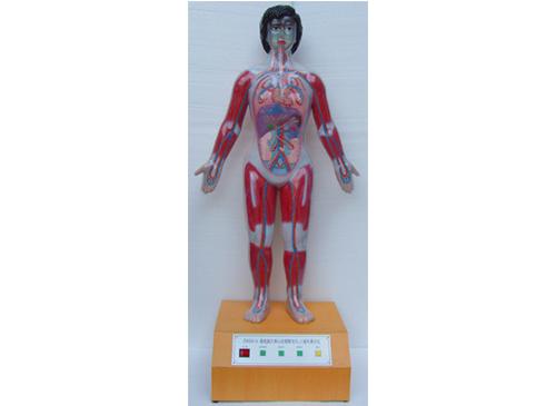 微电脑人体心动周期与大、小循环演示仪