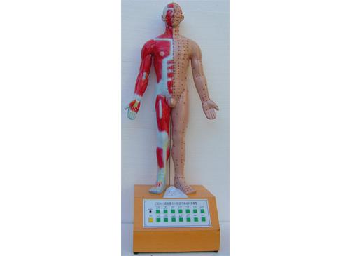 语音提示十四经穴电动针灸模型