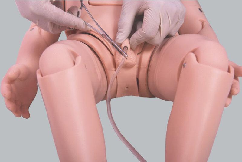 小儿导尿模型